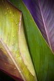 Três folhas Fotos de Stock
