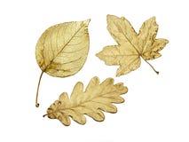 Três folhas douradas Imagem de Stock