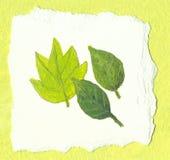 Três folhas verdes no fundo verde Imagens de Stock