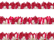 Três frames diferentes com os tulips vermelho-brancos. Foto de Stock Royalty Free