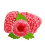 Três frutos da framboesa com as folhas isoladas no branco Fotos de Stock Royalty Free