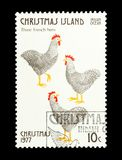 Três galinhas francesas Fotografia de Stock Royalty Free