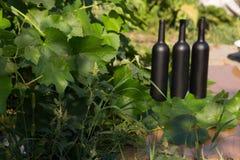 Três garrafas do preto no fundo das folhas da uva, nas folhas, na rua vinhedo no campo naughty imagem de stock royalty free
