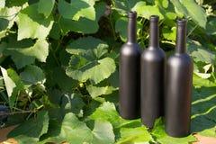 Três garrafas do preto no fundo das folhas da uva, nas folhas, na rua vinhedo no campo naughty fotografia de stock royalty free