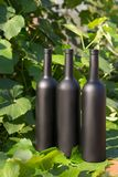 Três garrafas do preto no fundo das folhas da uva, nas folhas, na rua vinhedo no campo naughty foto de stock