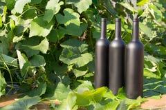 Três garrafas do preto no fundo das folhas da uva, nas folhas, na rua vinhedo no campo naughty imagem de stock