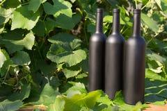 Três garrafas do preto no fundo das folhas da uva, nas folhas, na rua vinhedo no campo naughty fotografia de stock