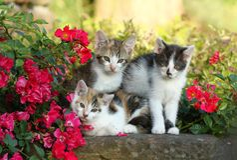 Três gatinhos Imagens de Stock Royalty Free