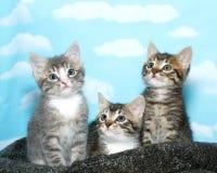 Três gatinhos do gato malhado que olham acima Foto de Stock