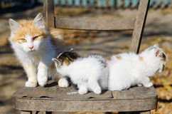 Três gatinhos em uma cadeira Imagens de Stock