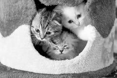 Três gatinhos na casa Imagem de Stock