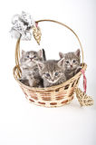 Três gatinhos na cesta Fotos de Stock Royalty Free