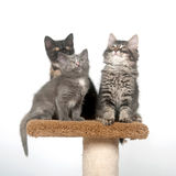 Três gatinhos que sentam-se na torre Imagens de Stock