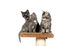 Três gatinhos que sentam-se na torre Imagem de Stock