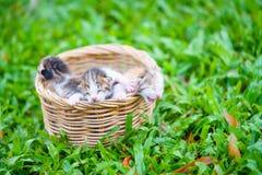Três gatinhos recém-nascidos que sentam-se na cesta de vime na grama verde fotografia de stock