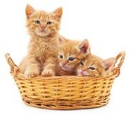 Três gatinhos vermelhos em uma cesta Imagens de Stock
