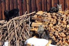 Três gatos Fotos de Stock Royalty Free
