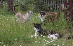 Três gatos fotografia de stock royalty free
