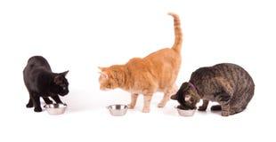 Três gatos com bacias do alimento, um comendo e dois que olham Fotos de Stock Royalty Free