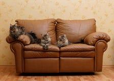 Três gatos em um sofá Fotografia de Stock Royalty Free