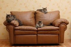 Três gatos em um sofá Imagens de Stock
