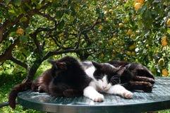 Três gatos que Snuggling junto em uma tabela fotografia de stock