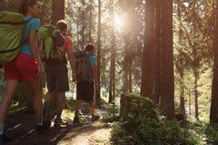 Três homem e mulher que andam ao longo do trajeto da fuga de caminhada em madeiras da floresta durante o dia ensolarado Grupo de  fotografia de stock