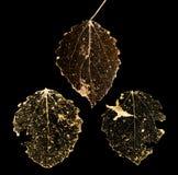 Três isolados nas folhas inoperantes pretas Foto de Stock Royalty Free