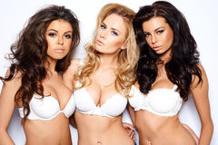 Três jovens mulheres curvaceous 'sexy' bonitas Foto de Stock Royalty Free