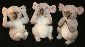 Três Koalas Fotos de Stock Royalty Free