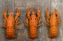Três lagostas vermelhas em seguido na tabela de madeira velha Imagem de Stock Royalty Free