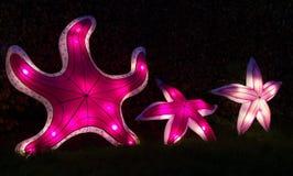 Três lanternas iluminadas do chinês da estrela do mar fotografia de stock