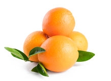 Três laranjas com as folhas isoladas no fundo branco Imagem de Stock
