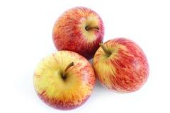 Três maçãs da gala Imagens de Stock