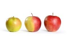 Três maçãs de verde ao vermelho Fotografia de Stock