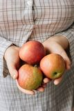 Três maçãs frescas nas mãos de uma mulher Fotos de Stock