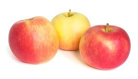 Três maçãs isoladas no branco Fotos de Stock Royalty Free