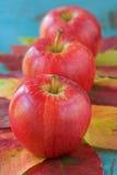 Três maçãs vermelhas com folhas fotografia de stock royalty free