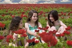 Três meninas em um campo vermelho Imagem de Stock Royalty Free