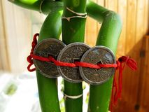 Três moedas chinesas são amarradas no bambu Fotografia de Stock Royalty Free