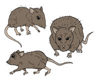Três mouses Fotografia de Stock Royalty Free