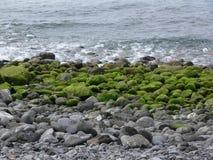 Três níveis da natureza de consideram a vida no custo encantador de Madeira Imagem de Stock Royalty Free