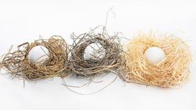 Três ninhos naturais do pássaro com ovos Foto de Stock