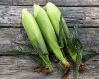 Três orelhas da espiga de milho escolhida fresca na casca Foto de Stock