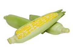 Três orelhas de milho Foto de Stock