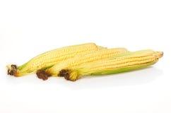 Três orelhas de milho isoladas no branco Imagens de Stock