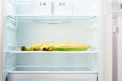 Três orelhas de milho na prateleira do refrigerador vazio aberto Imagens de Stock Royalty Free