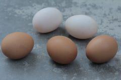 Três ovos da galinha e fundos do clássico de dois ovos do pato Fotos de Stock