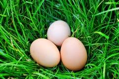 Três ovos da galinha encontram-se na grama verde imagem de stock