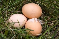 Três ovos da galinha que encontram-se em uma grama verde Fotos de Stock